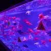 ■アート|アートアクアリウム 魅惑の金魚アートが素晴らしい