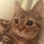 ■社会|猫がスリスリするのは、いったい何故なのか!?