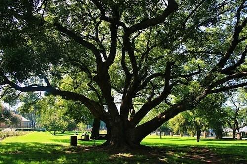 oak-tree-292111_640