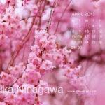 ■アート|桜、サクラ